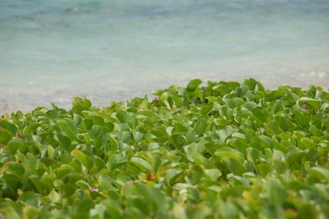 イパンビーチ2