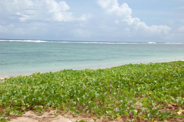 イパンビーチ3