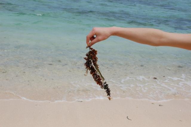 イパンビーチ6