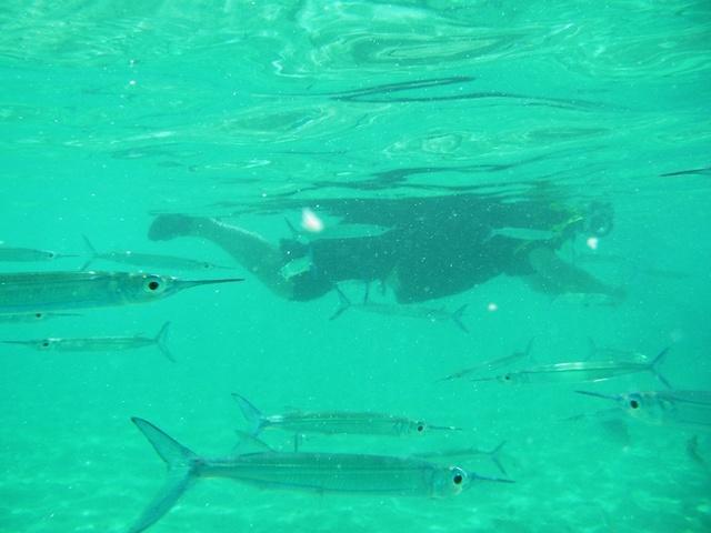 イパオビーチ シュノーケル